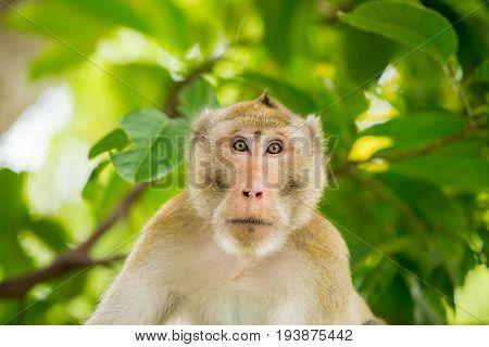 monkey thailand lookat me whit green background