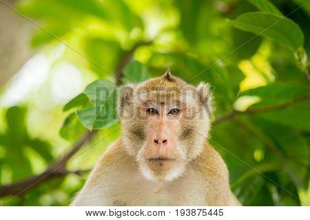 monkey thailand on the tree whit green background