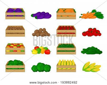 Set of vegetables in wooden boxes isolated on white background. Eggplant, potatoes, peppers, cabbage, carrots, tomatoes, cucumbers, corn. Organic food illustration. Fresh vegetables from the farm.