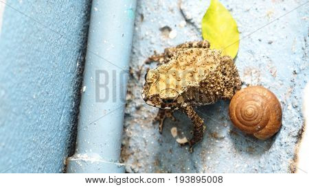 Toad is amphibian with friend snail and near the water pipes Background is cement floor blue color.