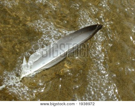 A Feather In The Water