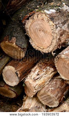 background: stacked logs heap cut logs brown vertical