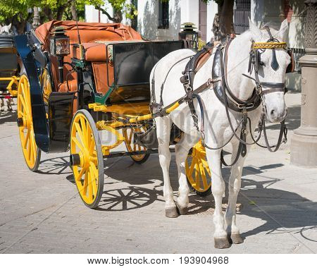Horse Drawn Carriage, Seville, Andalucia, Spain
