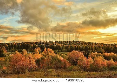 Bright rural autumn landscape at sunset - beautiful seasonal background with red foliage and golden sunbeams