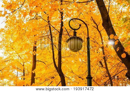 Autumn park landscape - orange autumn trees and metal lantern on the background of yellowed autumn leaves in the autumn park. Autumn city landscape of colorful autumn nature. Autumn background with golden autumn trees