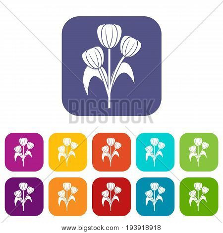 Flowers icons set vector illustration in flat style In colors red, blue, green and other