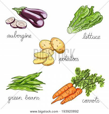set of isolated hand drawn vegetables: aubergine, lettuce, potatoes, green beans, carrot