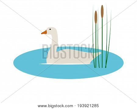 Vector illustration of a wild goose in a pond with reeds. Isolated white background. Flat style. A wild bird floats on the water.