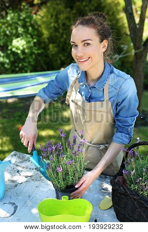Planting flower garden.Female plants in pot plants forming a beautiful composition flower