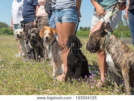 different dogs in a training of obedience