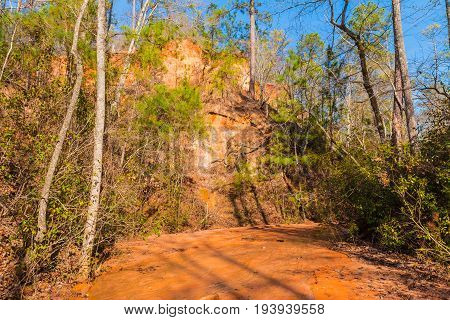 Red loamy wall of Providence Canyon clay watercourse of creek and thicket in sunny autumn day USA