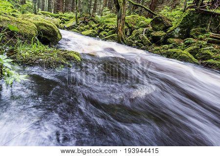 river in a forest Sumava - national park Czech republic Europe