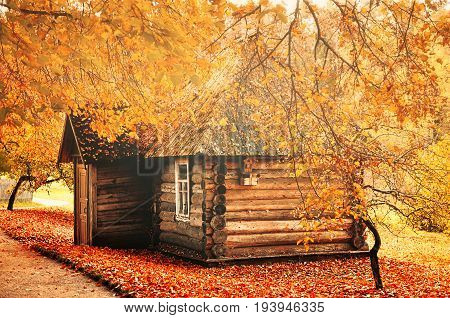 Autumn landscape - small wooden house among the yellowed autumn trees with fallen autumn leaves on the ground. House in the autumn forest. Autumn landscape view. Rural autumn scene with yellowed autumn trees and house in the autumn forest