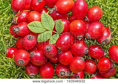 rose hips close up in the detail