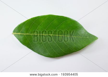 Green Leaf Longan Tree Isolated