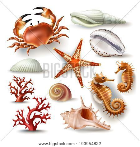 Set of vector illustrations, badges, stickers, seashells of various kinds and coral, crab, starfish in realistic style isolated on white
