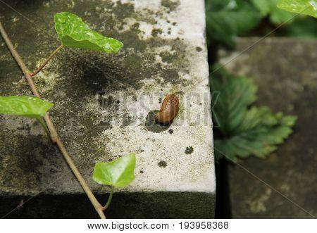 close photo of a slug on the grave