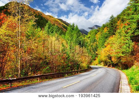 Bending Road Among Colorful Fall Woods. Amazing Autumn Landscape