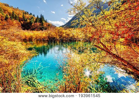 Autumn Forest Reflected In Fantastic Pond With Azure Water