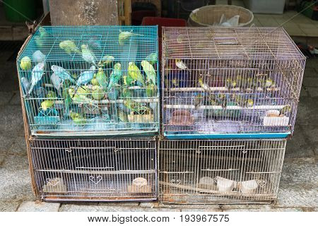 Canaries and Songbirds in Cages For Sale