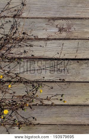Old Gray Wooden Boards