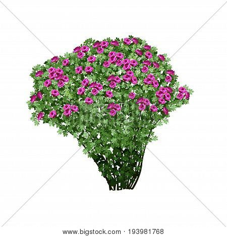 Big bush of a dogrose (Rosa majalis) with terry red flowers the color vector image on a white background
