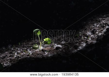 New life concept. Small plant growing in the dark with only small amount of light