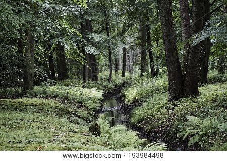 Stream in dense deciduous forest in Poland
