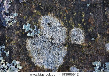 a lichen close up in the detail