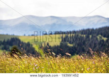 Beautiful Nature Landscape - Alpine Meadow