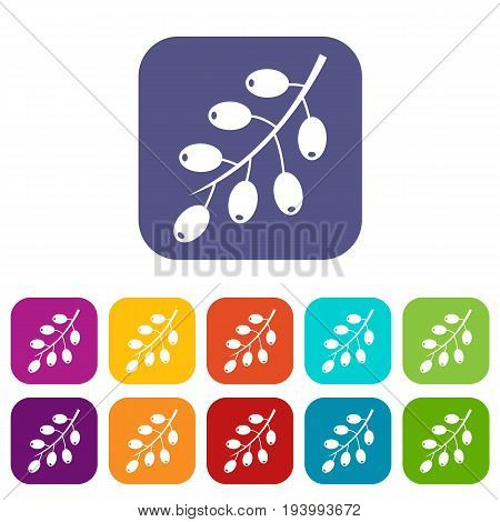 Barberry branch icons set vector illustration in flat style In colors red, blue, green and other