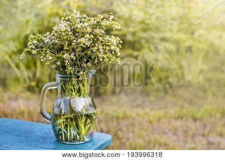 Bouquet of field chamomiles in a transparent jug on a background of greenery