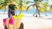 Mutt black dog with beach accessories. Funny summer concept. poster