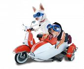two chihuahuas in a scooter and sidecar poster