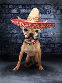 a tiny chihuahua with a sombrero hat on poster