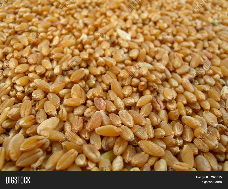 Pile Wheat Image & Photo (Free Trial)   Bigstock