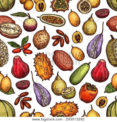 Exotic Tropical Fruits Harvest Of Persimmon, Akebia And Cantaloupe Melon, Durian Or Jackfruit. Vecto