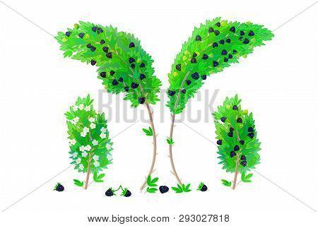 Vector Cartoon Plants Nature Clip Art. Blackberry Bush