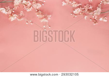 Beautiful And Peaceful Spring Flower Blossoms Against A Coral Colored Background. Image Shot From To