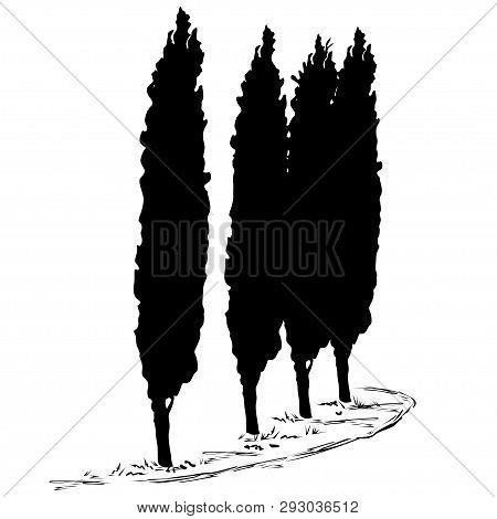 Four Silhouettes Of A Tree Of A Cypress (cupressus L.) And A Footpath Along Them, The Black Vector I