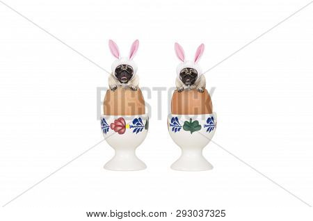 Two Cute Easter Pug Dogs, Sitting In Eggs In Egg-cup, Isolated On White Background