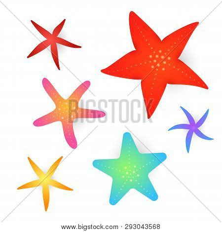 Collection Of Sea Stars. Various Colorful Underwater Invertebrate Animals. Can Be Used For Topics Li