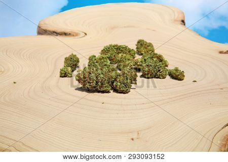 Marijuana Buds. Wooden Tree Stump table. Cannabis Sativa buds. Natural Medical Marijuana. isolated on white. room for text. Recreational Marijuana. Medical Cannabis. Wooden Tree Stump.