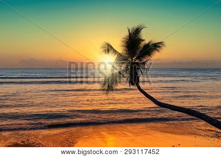 Spectacular Sunset Over The Sea With Coco Palm Over The Beach In Jamaica Caribbean Island, Vintage P