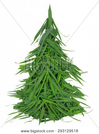 Spruce Made From Green Grass Isolated On White. Clipping Path Included.