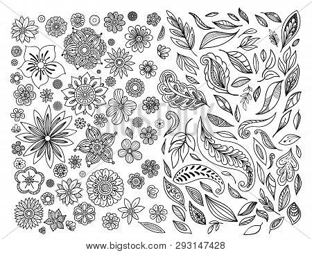 Hand Drawn Leaves And Flowers Collection. Floral Design Elements Set. Black And White Vector Illustr