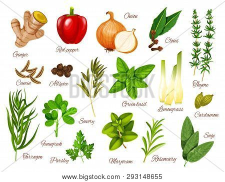 Spices, Herbs And Vegetable Seasonings Vector Icons Of Food Condiments. Red Pepper, Green Basil And