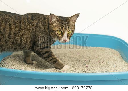 The Excretion Of A Cat At The Sandbox In The Morning.