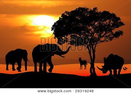 African Wildlife Sunset Scene
