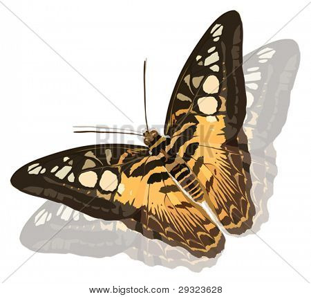 illustration with butterflies isolated on white background